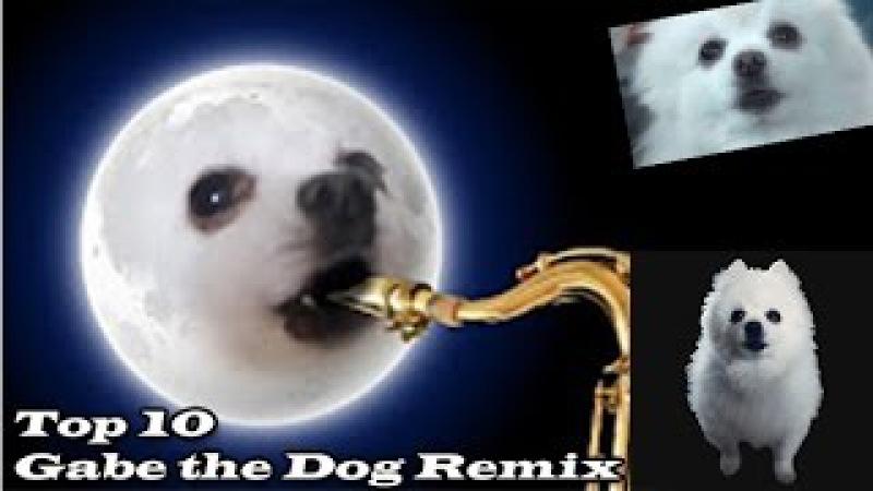 TOP 10 GABE THE DOG|REMIX| Топ 10 Гейб собак Ремикс| Ripgabe