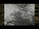 Виктор Вуячич - Птицы небо понимают