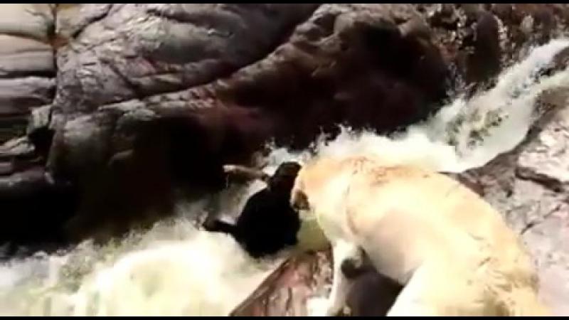 Нағыз дос басыңа қиын іс түскенде жәрдемсіз қалдырмайды