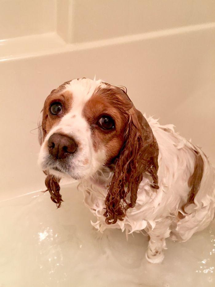 Домашние животные во время купания - 20 фото