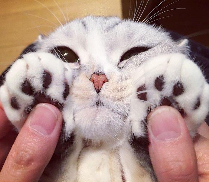 Знакомьтесь, Hana – пушистый котенок (20 фото)