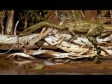 Прогулки с динозаврамиWalking with dinosaurs серия 1