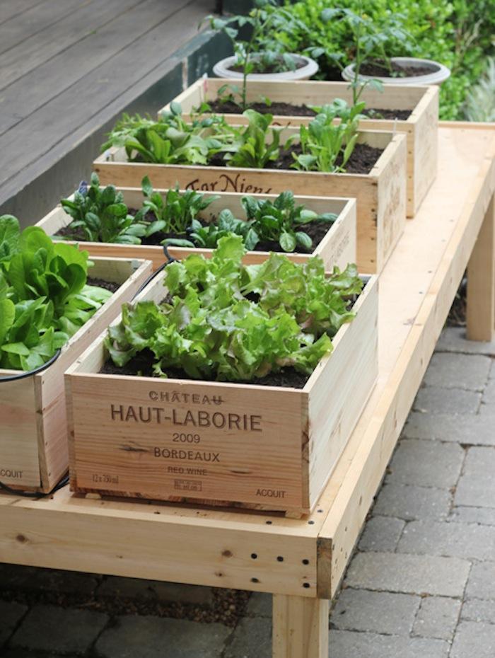 Выращивание зелени в коробах 4