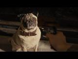The Kingsmen Pug