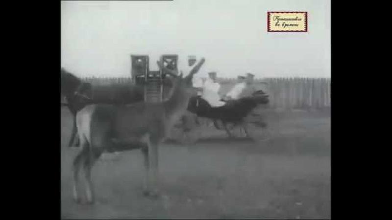 Херсонская область Аскания Нова 1914 год Визит Николая II Askania Nova in 1914 Nicholas II's