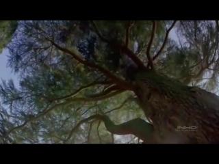 Флёр - Шелкопряд (Музыкальный клип)