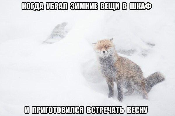 Прошел в лесу слух, что через неделю наступит конец света...  Смешные картинки, мемы на сайте 8 Долгих лет