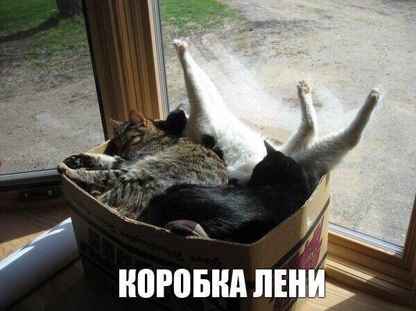 Фото котов. Коробка лени.