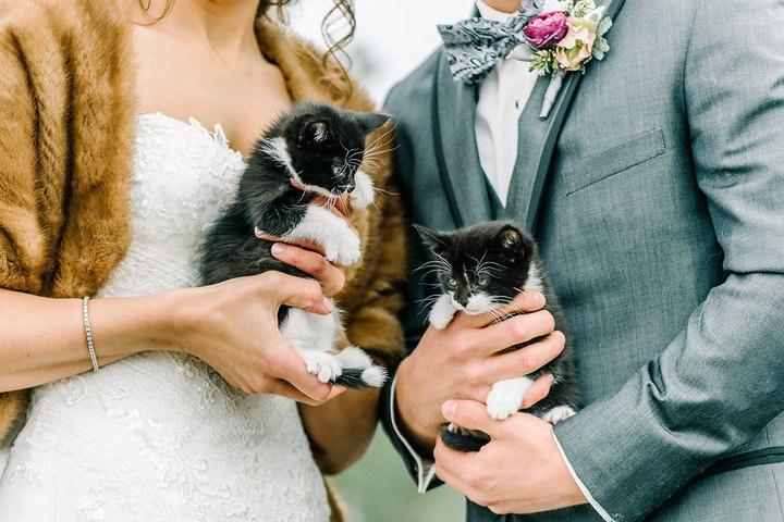 IzUveD9uZoU - Свадьба с котятами – мировой тренд в организации свадеб (13 фото)