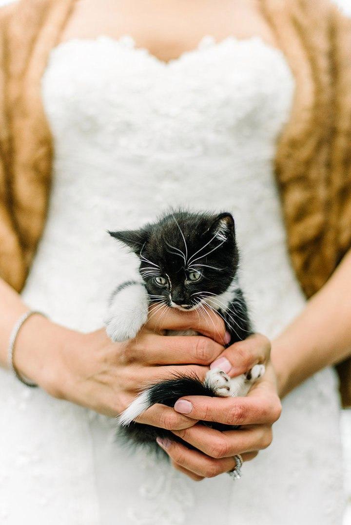 kqpjsW4tS M - Свадьба с котятами – мировой тренд в организации свадеб (13 фото)