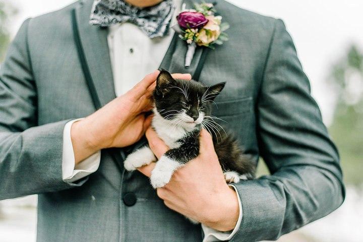 TAFV2OQShdg - Свадьба с котятами – мировой тренд в организации свадеб (13 фото)