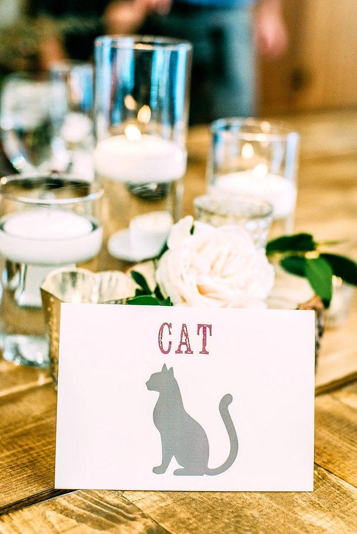 1cun5gnqa4k - Свадьба с котятами – мировой тренд в организации свадеб (13 фото)