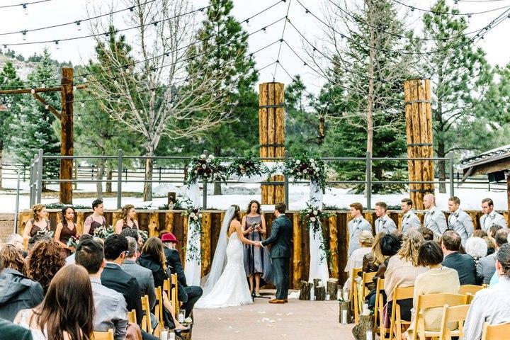 gkPerUilvvs - Свадьба с котятами – мировой тренд в организации свадеб (13 фото)