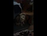 Сынуля с кошкой Пумой