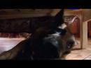 Т/С Лорд Пёс - полицейский 7 серия 2013г
