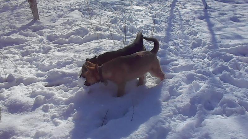 Собаки- ищейки))