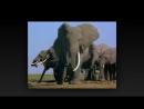 BBC Ребятам о зверятах 4 серия Слоненок Эбу
