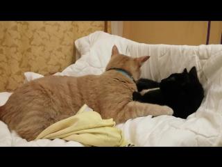 милота :) Рыжий и Фрося