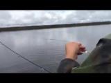 Как правильно ловить рыбу.Берем блесну, опускаем ее в озеро, ждем 2 секунды и вы