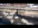 Сочи. Слив отходов в реку,в ста метрах от моря. 5.04.17