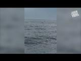 Рыбак спас оленя посреди океана!