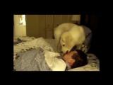 Животные будят своих хозяев