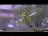 Молодая листва, годской парк, весна в городе. Бесплатный Видео футаж HD