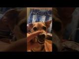 Пёс не любит вертикальное видео