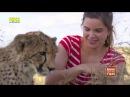 Anna und die wilden Tiere So jagt der Gepard