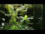 GreenDeepThe real rainforest in home.(S-size eco-terrarium 30X40X45CM)