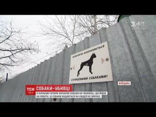 На Київщині чотири вівчарки загризли до смерті перехожого