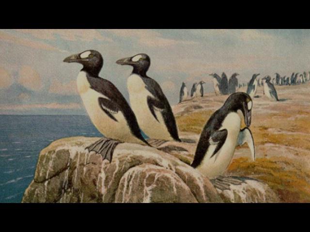 Колониальные птицы (рассказывает орнитолог Евгений Коблик)