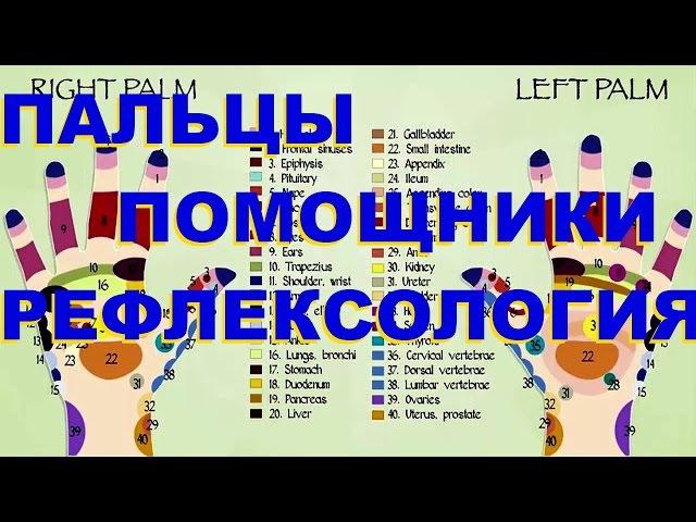 ПАЛЬЦЫ ПОМОЩНИКИ РЕФЛЕКСОЛОГИЯ