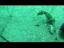 Подводная съемка, Черное море, п.Морское (Крым)