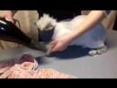 сушу котика после купания в наморднике,чтобы не укусил ВалерияСтрижкахерсонстрижкакота