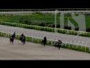 Лошадь Филиция из РСО-А стала серебряным призером на конных скачках в Ставрополье