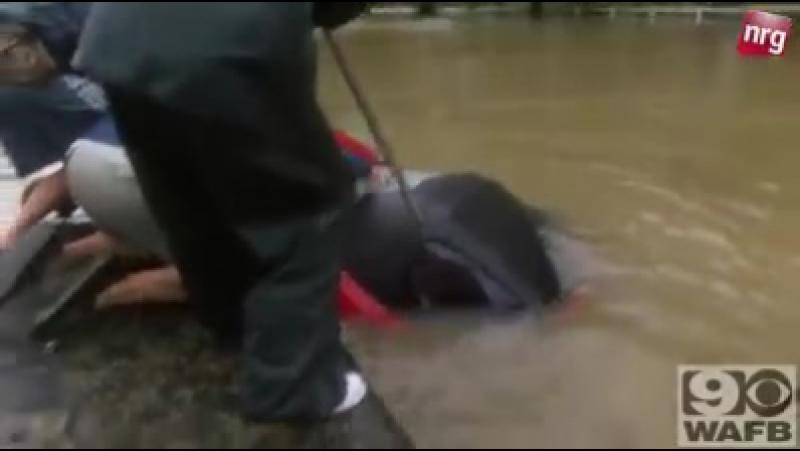 Героический поступок спасателей , в последний момент спасли женщину и ее собаку .