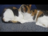 Синди и Эльза, две сестренки. 11.12.16