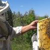 Натуральный степной мёд из Б. Глушицы в Самаре