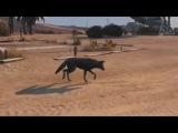 Big Bad Wolf GTA 5