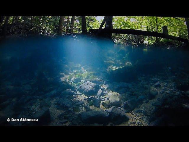 OCHIUL BEIULUI - peisaj subacvatic