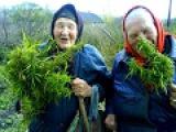 Зеленое УДОБРЕНИЕ. ТРАВЯНОЙ НАСТОЙ. ВЫСОКИЕ УРОЖАИ. Green manure. Herbal infusion.