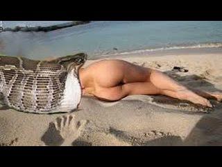 Giant anaconda attack People | Biggest Python snake | Most amazing wild animal attacks