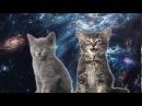 Песня космических котиков