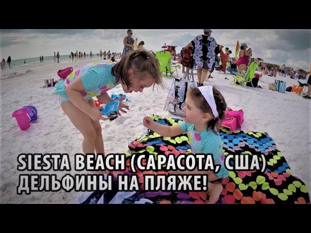 62 Пляж Siesta beach в Сарасоте (Флорида, США). Дельфины на пляже!