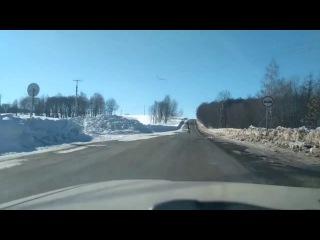 Олень в Татарстане