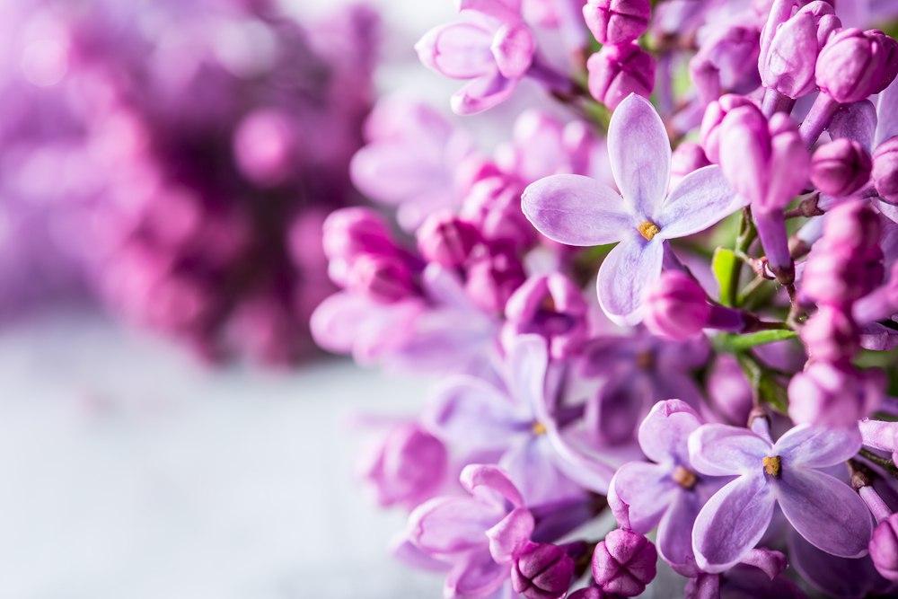Луковичные растения и цветы для сада все про многолетники
