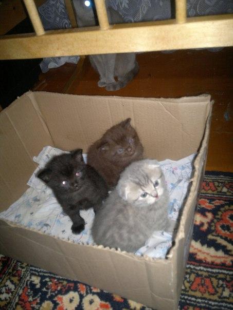 [id117836999|Елена] , котята документы то имеют?  Судя по выражениям и