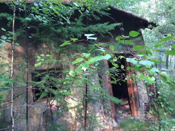 Жительница Якутска, ездившая по грибы, рассказала об опасной встрече