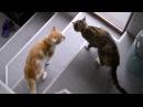 Ужасные коты-мышеловы. Сцены любви без насилия.
